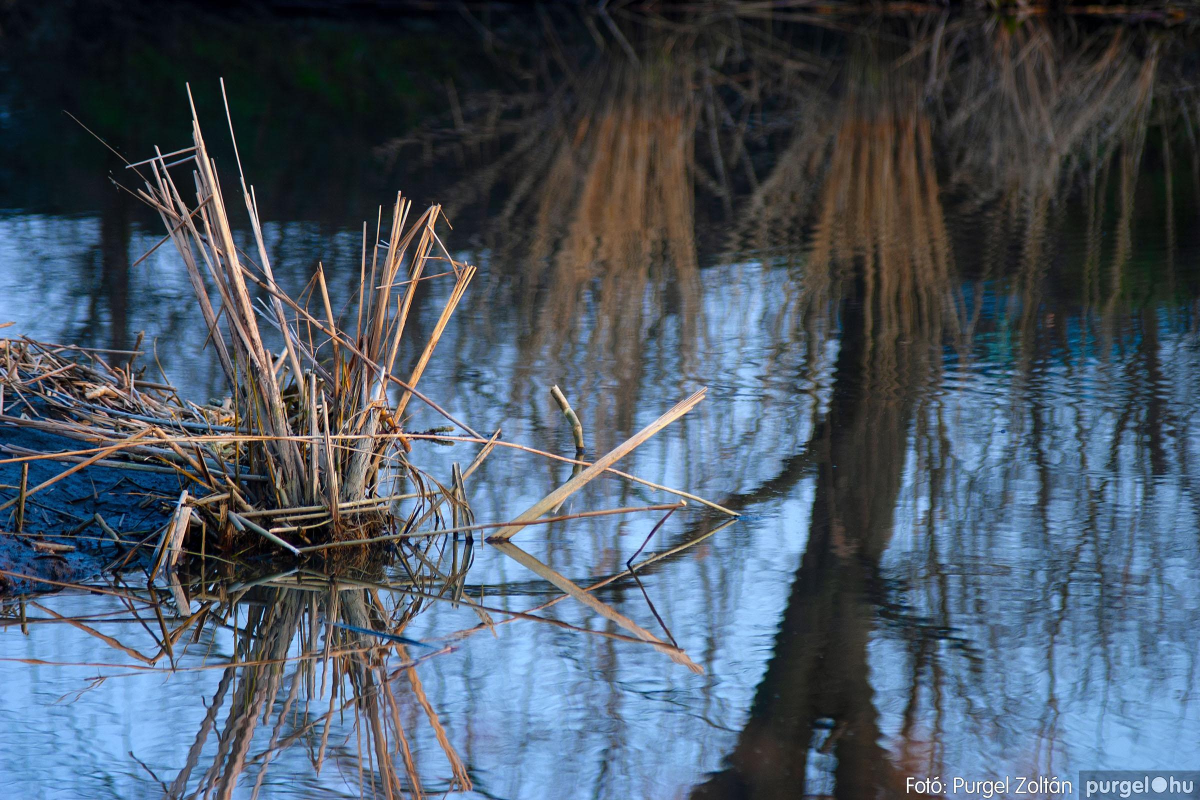 2007.03.16. 025 Éledező természet a Csordajáráson - Fotó:PURGEL ZOLTÁN© DSC_0069q.jpg