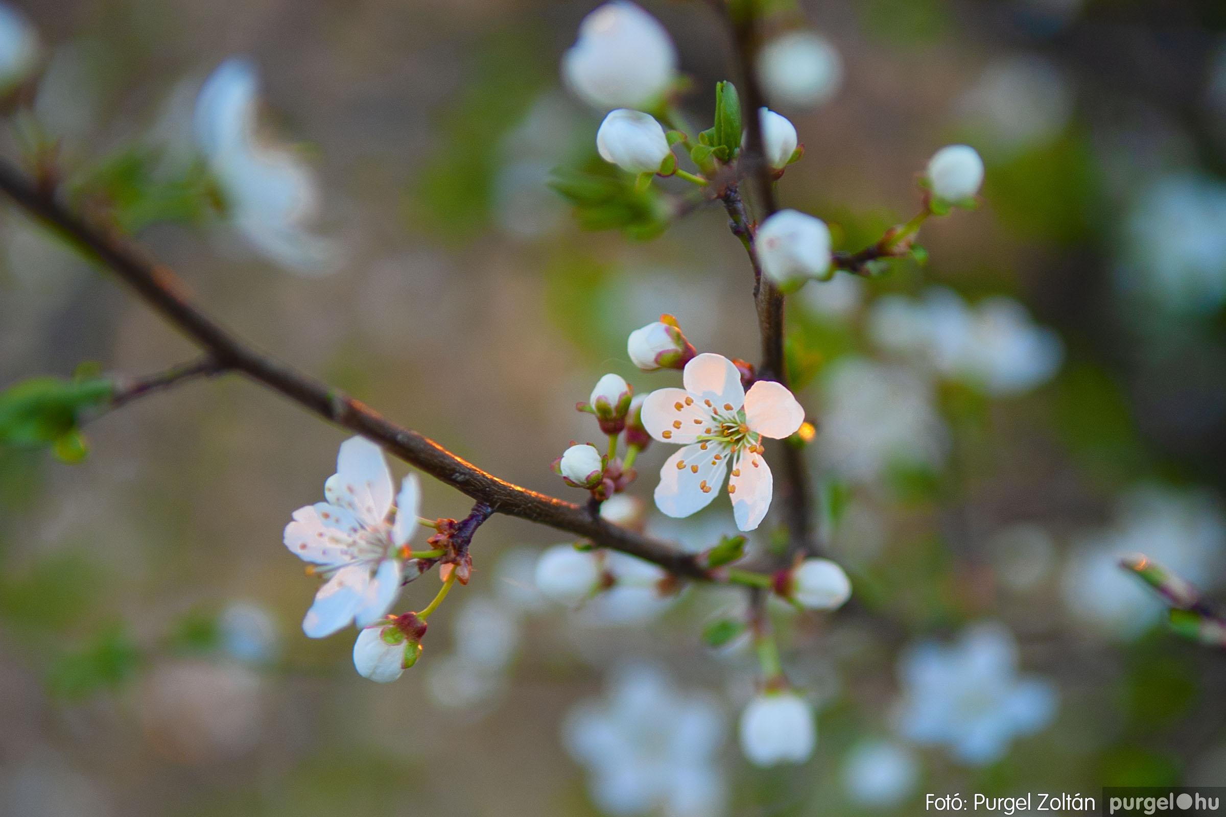2007.03.16. 031 Éledező természet a Csordajáráson - Fotó:PURGEL ZOLTÁN© DSC_0078q.jpg