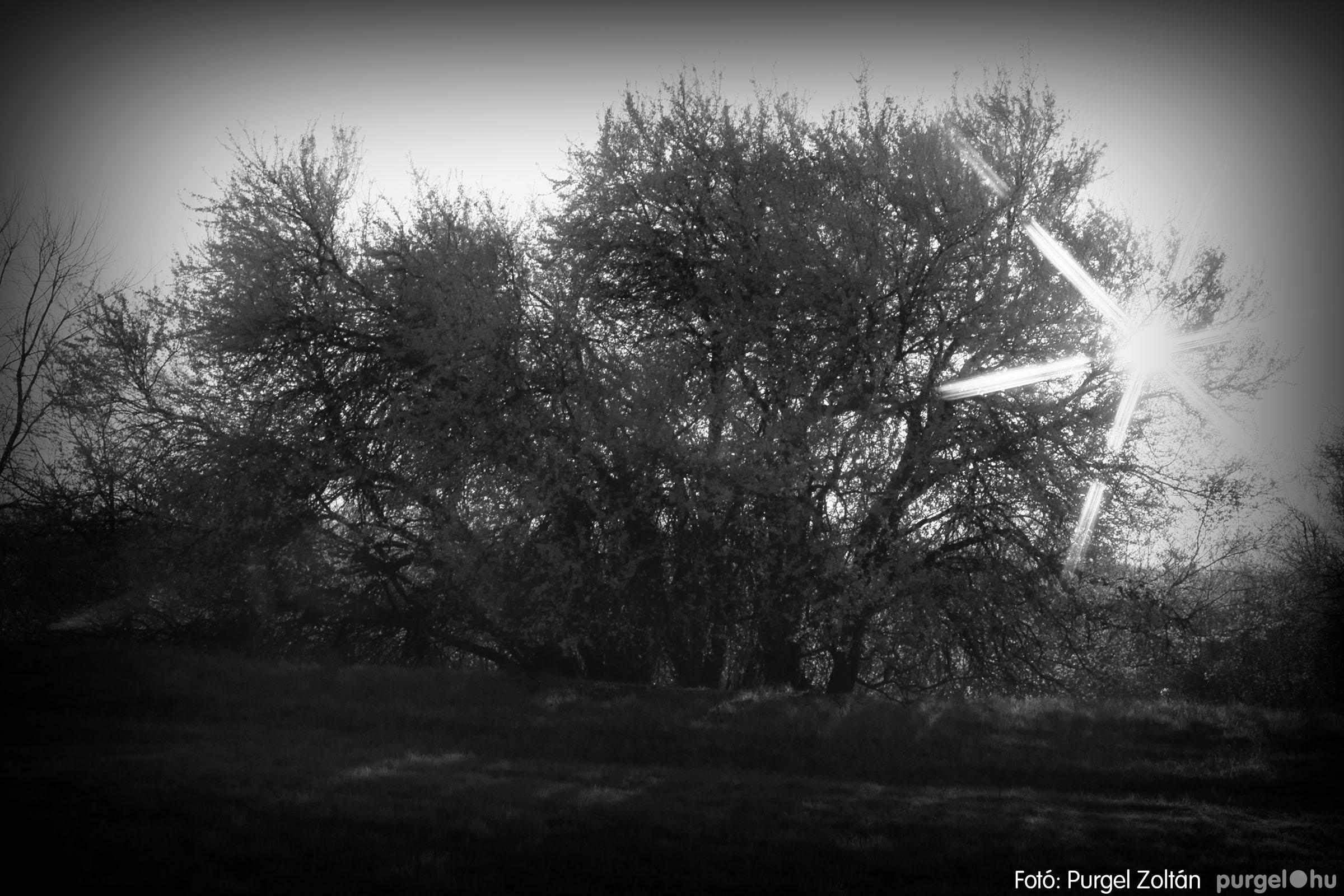2007.03.16. 014 Éledező természet a Csordajáráson - Fotó:PURGEL ZOLTÁN© DSC_0047q.jpg