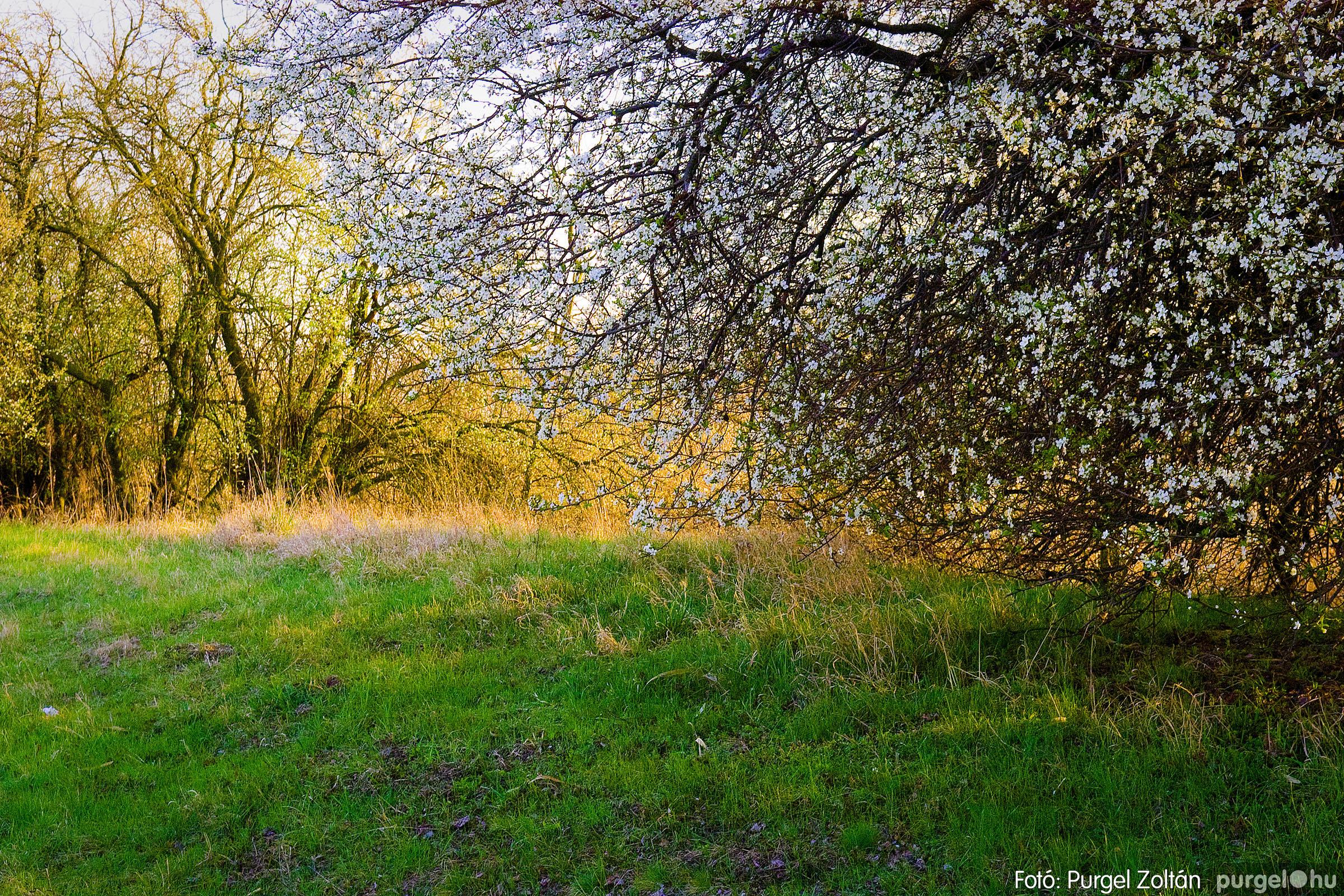2007.03.16. 001 Éledező természet a Csordajáráson - Fotó:PURGEL ZOLTÁN© DSC_0020q.jpg