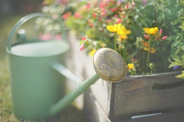 Blooming Summer...
