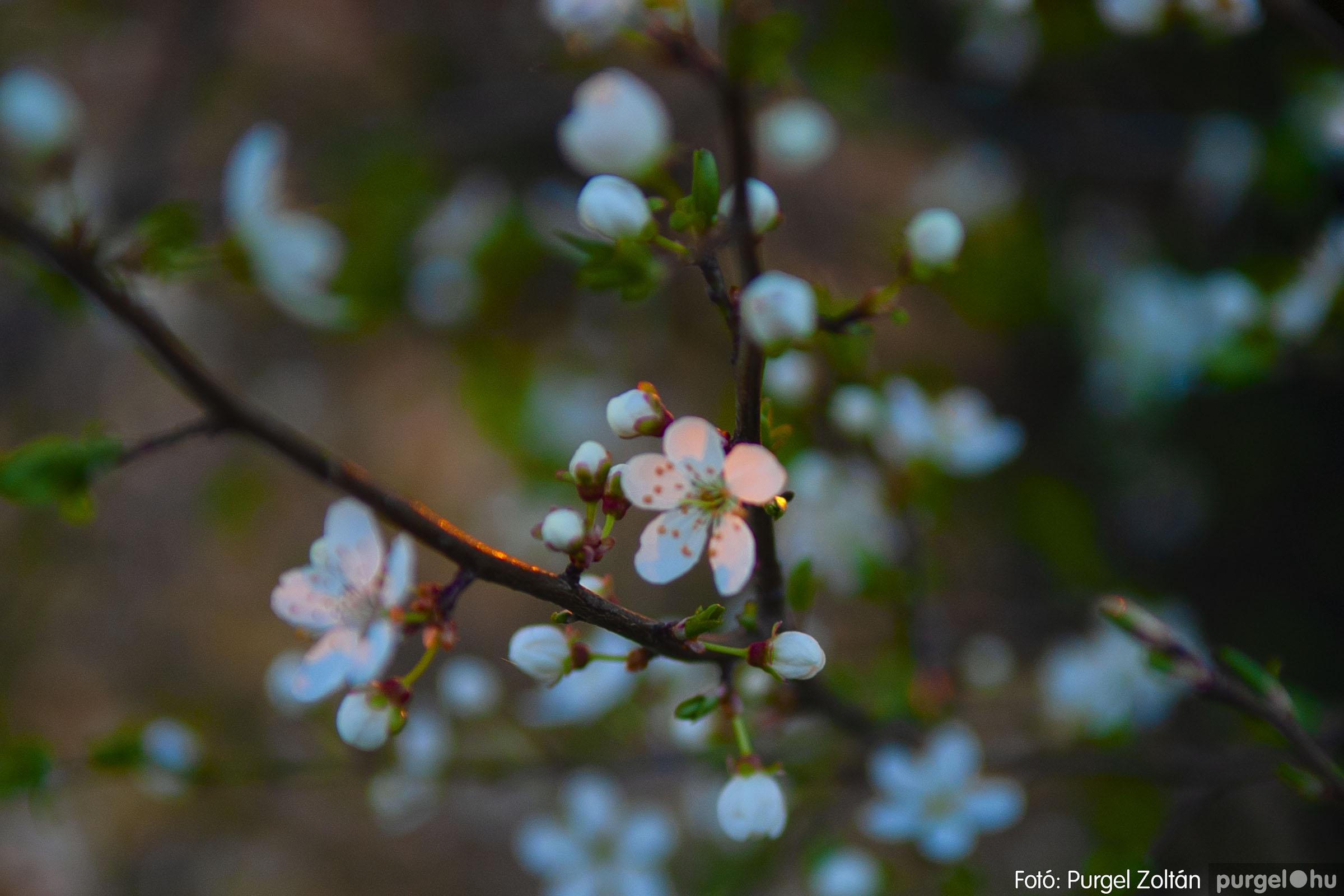 2007.03.16. 030 Éledező természet a Csordajáráson - Fotó:PURGEL ZOLTÁN© DSC_0077q.jpg