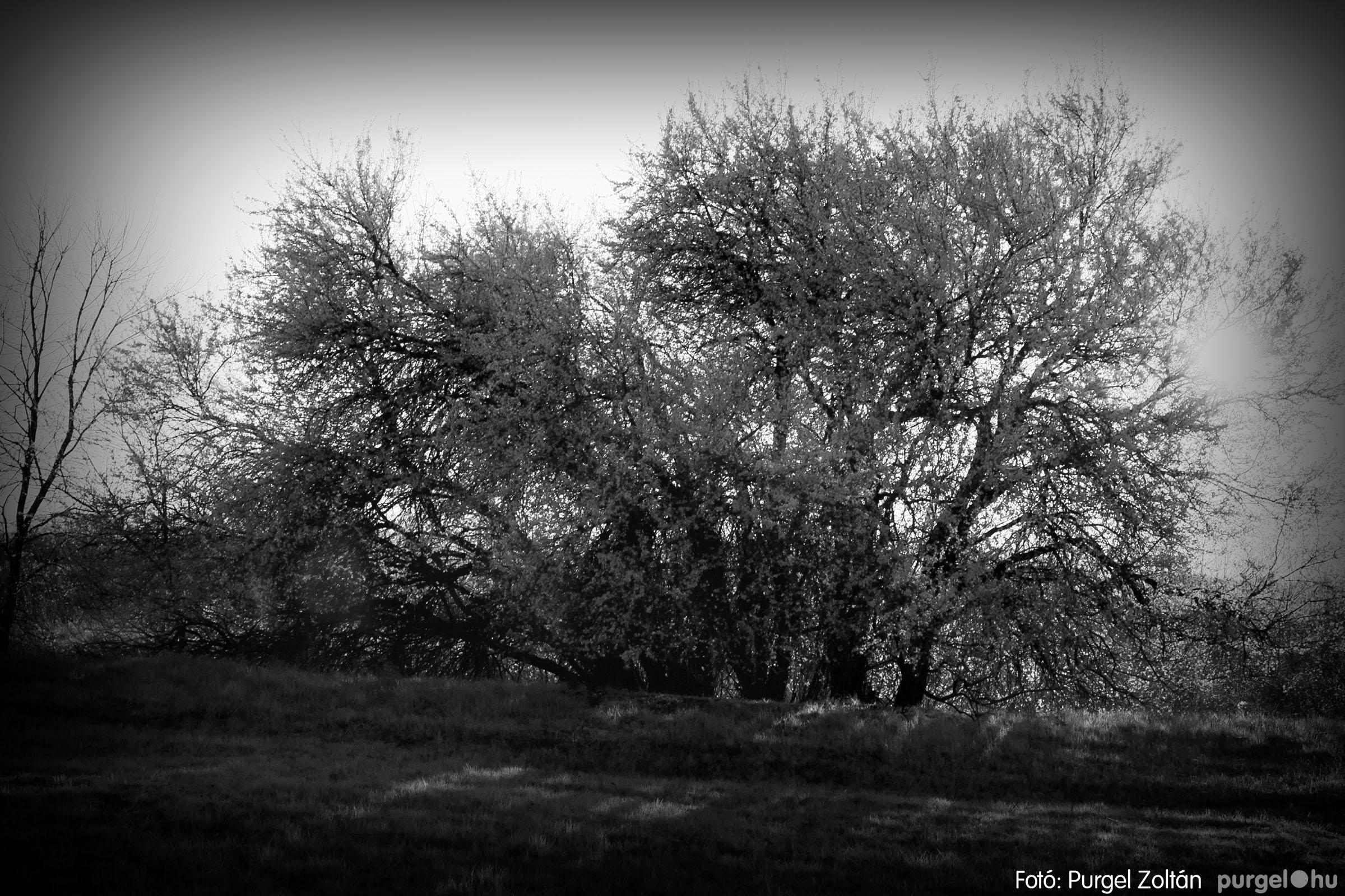 2007.03.16. 015 Éledező természet a Csordajáráson - Fotó:PURGEL ZOLTÁN© DSC_0048q.jpg
