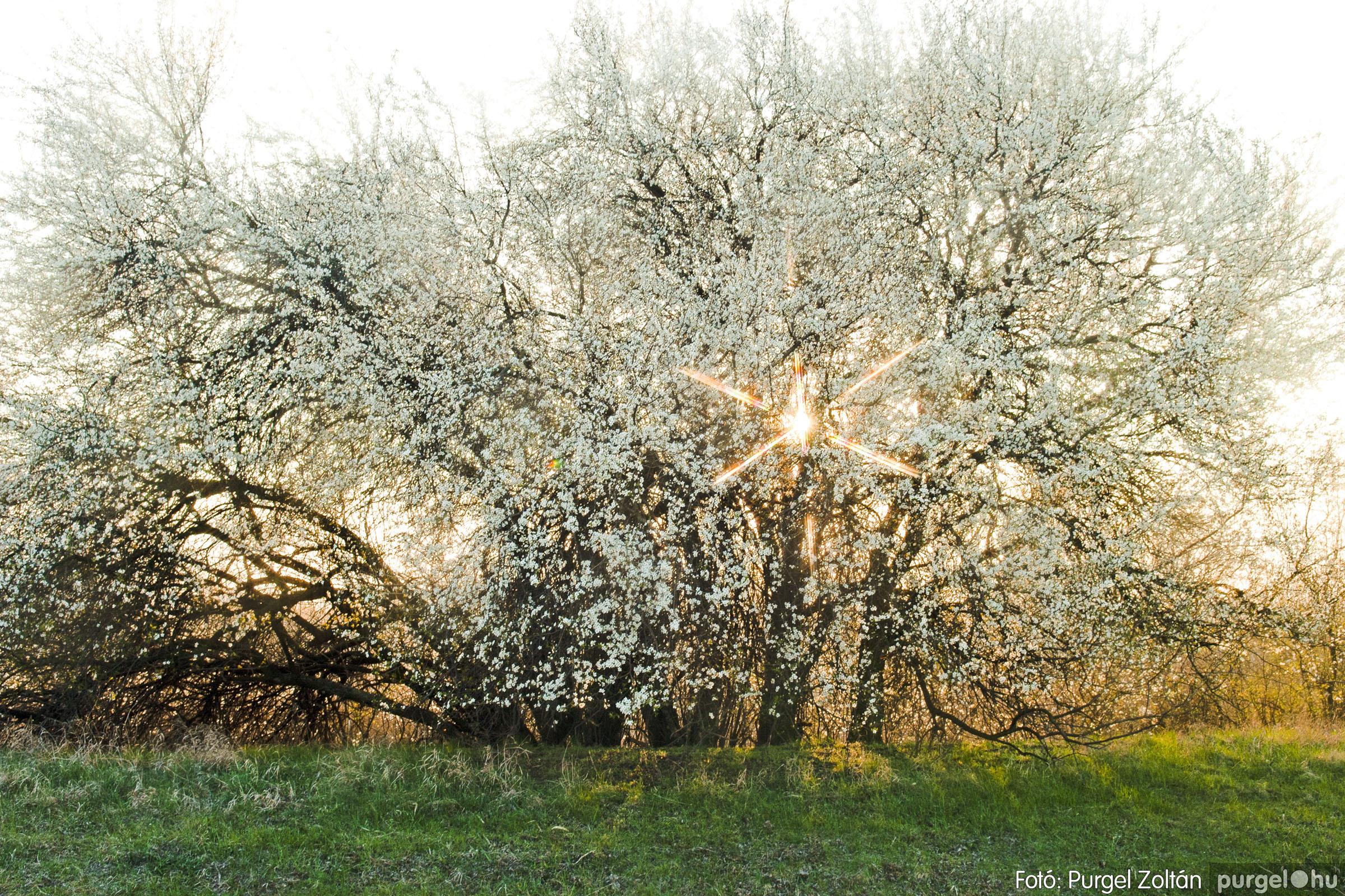 2007.03.16. 011 Éledező természet a Csordajáráson - Fotó:PURGEL ZOLTÁN© DSC_0041q.jpg