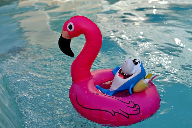 Shark Week - Flamingo Friday