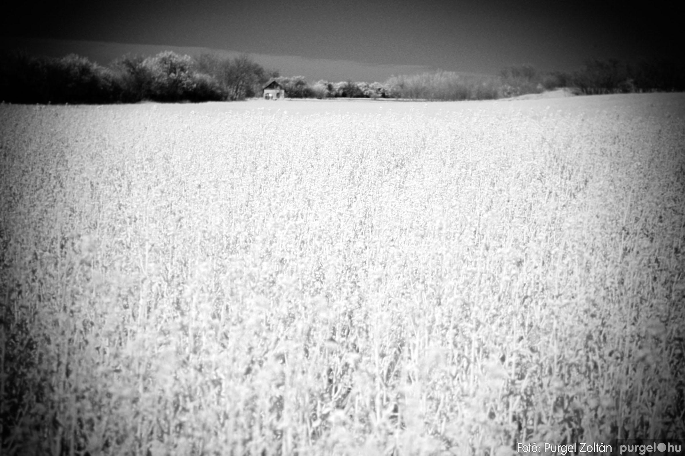 2007.04.08. 003 Virágzó repcemező Szegvár határában - Fotó:PURGEL ZOLTÁN© DSC_0206q.jpg