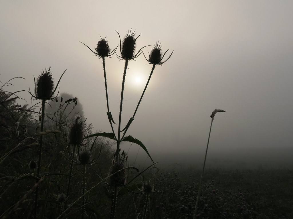 Im Nebel - A foggy morning