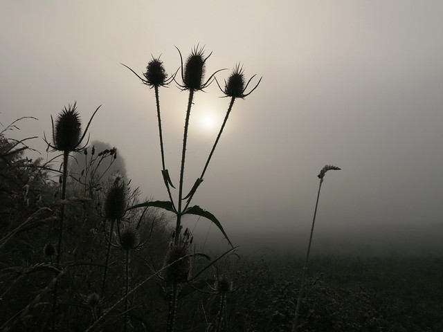 Im Nebel - A foggy morning
