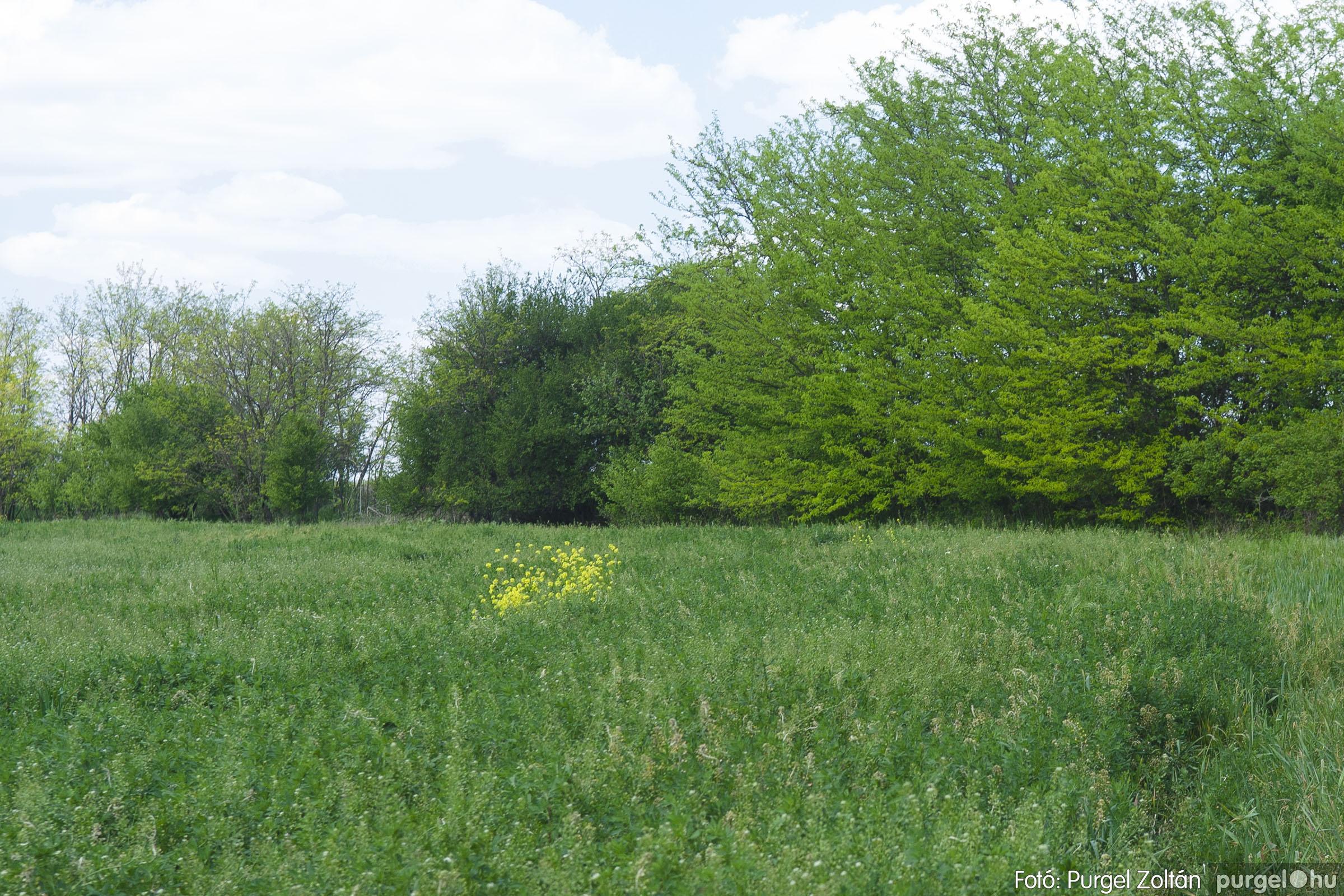 2007.04.30. 005 Barangolás a Kontrában - Fotó:PURGEL ZOLTÁN© DSC_0137q.jpg