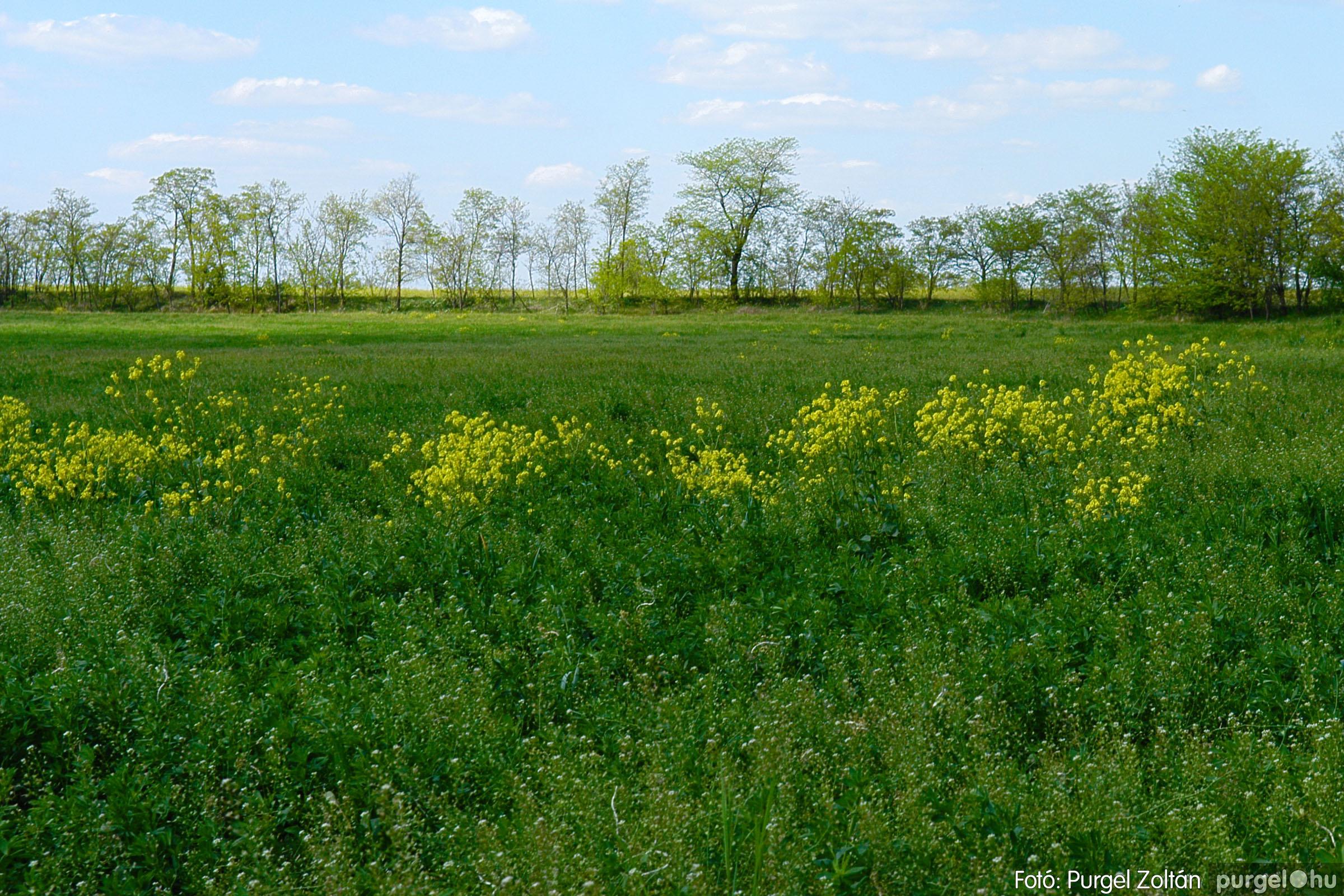 2007.04.30. 002 Barangolás a Kontrában - Fotó:PURGEL ZOLTÁN© DSC_0132q.jpg