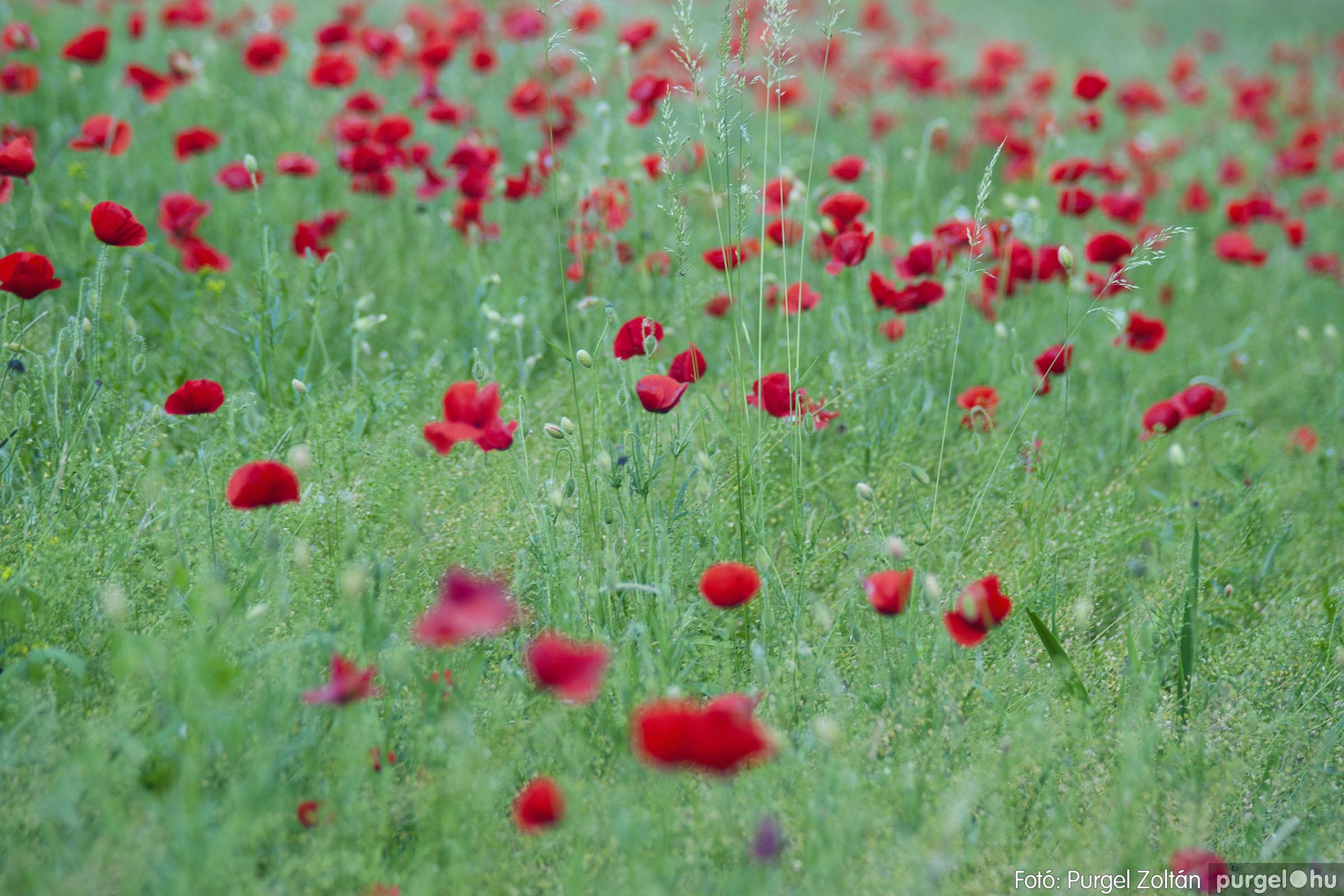 2007.05.14. 015 Vadvirágos Lándor és környéke - Fotó:PURGEL ZOLTÁN© DSC_0159q.jpg