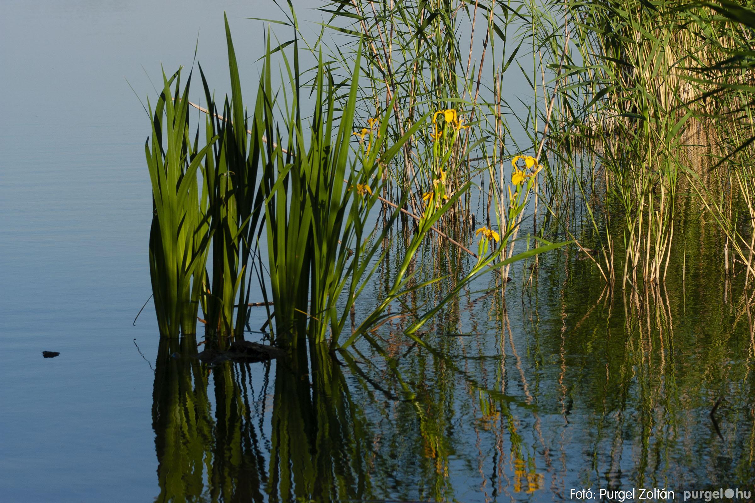 2007.05.14. 005 Vadvirágos Lándor és környéke - Fotó:PURGEL ZOLTÁN© DSC_0142q.jpg