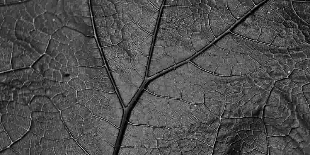 feuille-fossilisée-indices-climat-crétacé