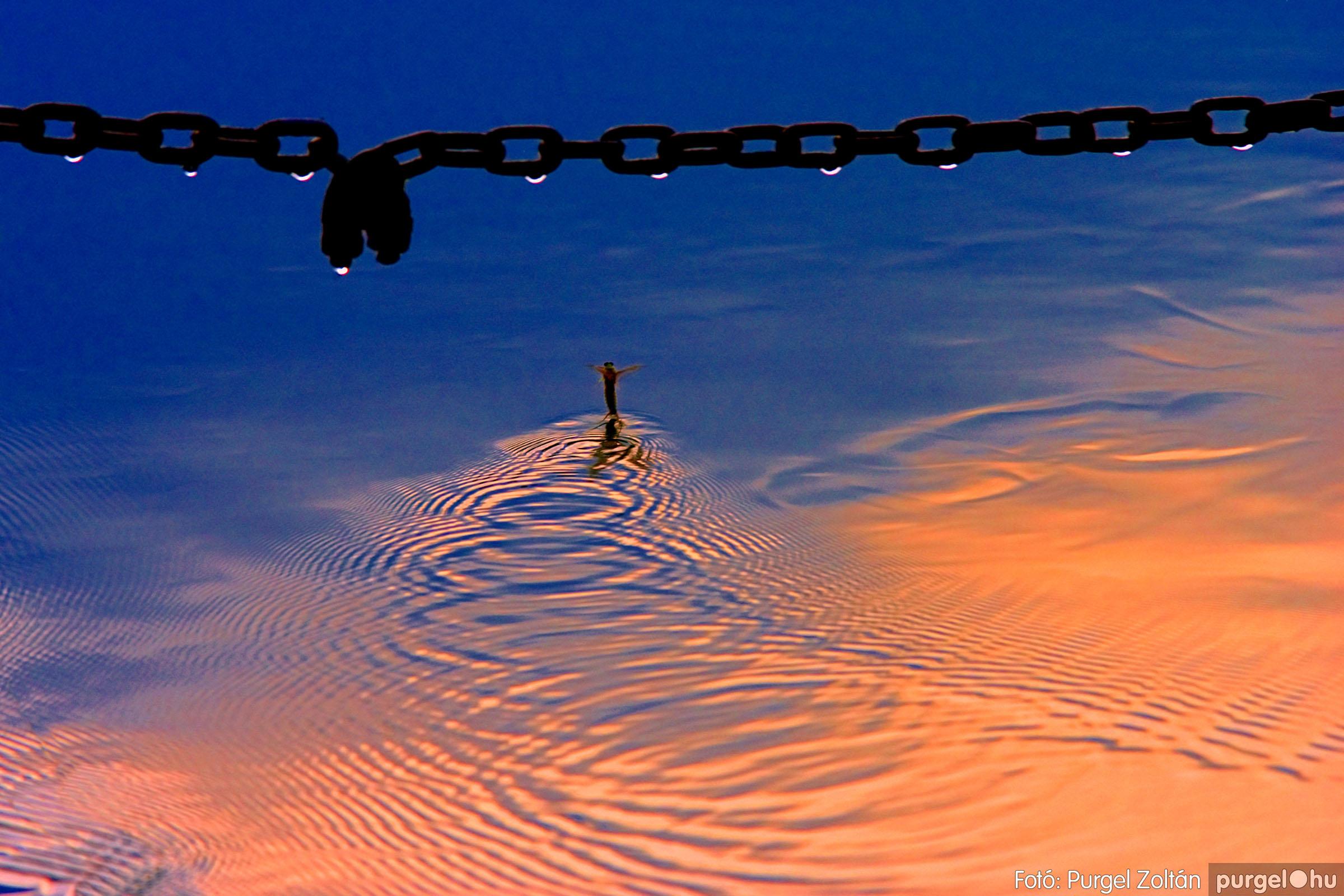 015 Örök pillanatok fotókiállításom képei - Tiszavirág a révnél · May fly next to ferry - Fotó:PURGEL ZOLTÁN©.jpg