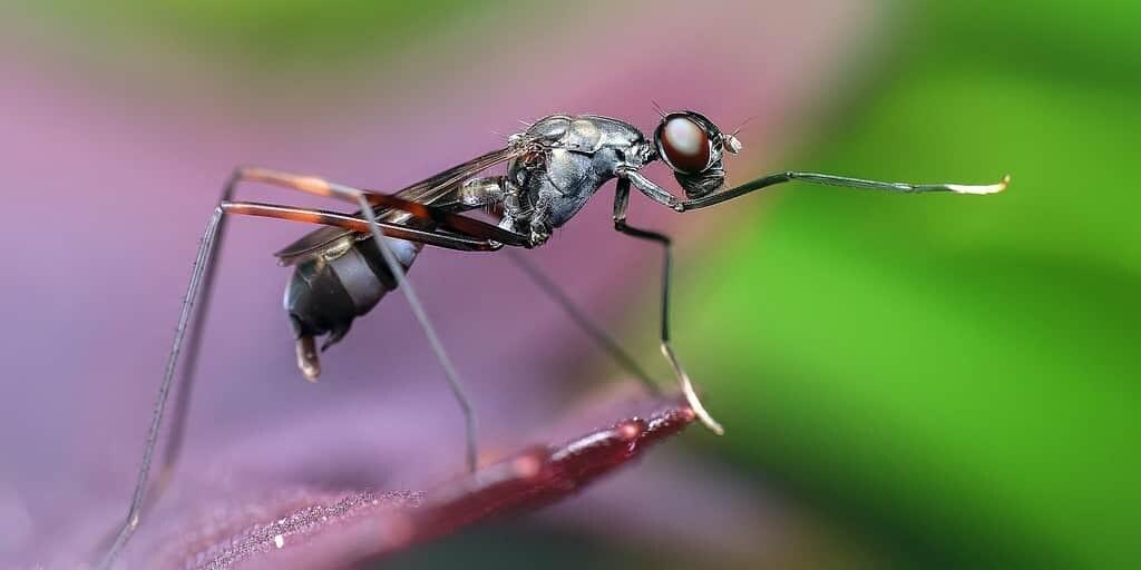 vidéo-montre-comment-les-formis-libèrent-leur-venin