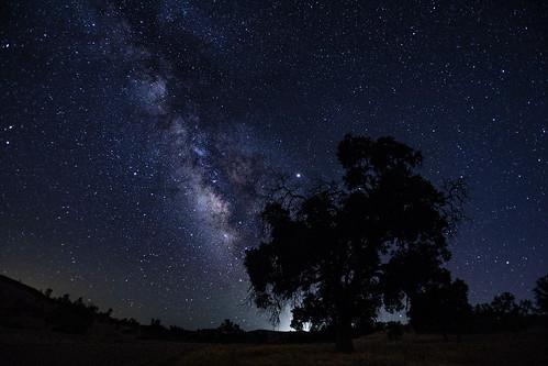 Milky Way with Oak