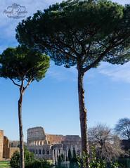 Carpe Diem 😊  #coliseo #coliseum #anfiteatro #romano #ciudad #city #roma #italia #sombras #shadow #turismo #tourism #viajar #travel #paisaje #landscape #photography #photographer #inspired_by_colour #MiFotoDR #sonyimages #sonyalphasclub #sonystas #s