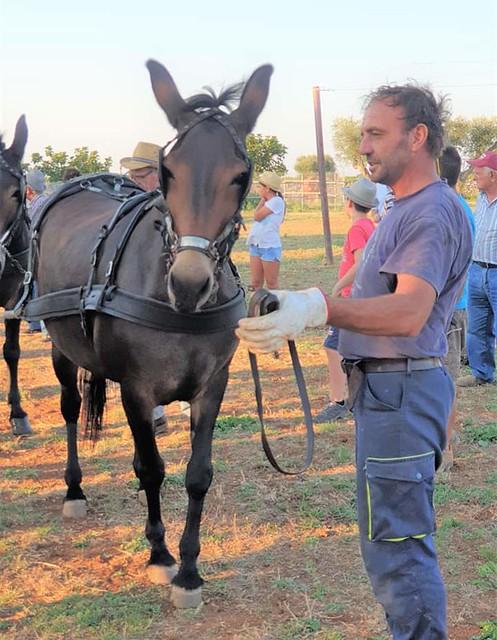 mule (12)