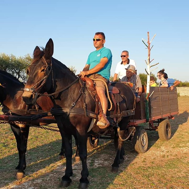 mule (6)