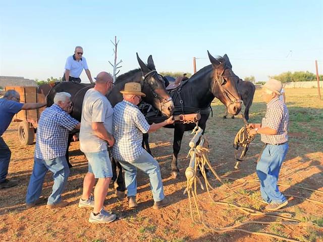 mule (2)