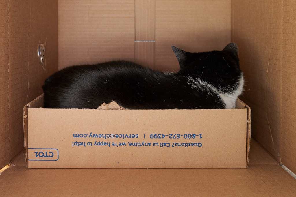 Our cat Boo sleeps in a cardboard box inside a much larger cardboard box on December 24, 2018