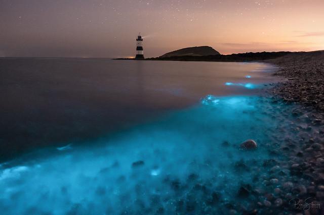 'Penmon Perseverance' - Bioluminescent Plankton Bloom, Anglesey