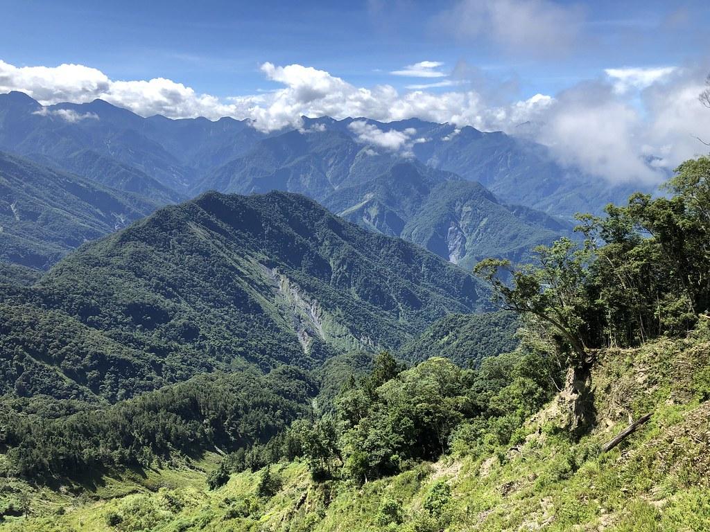 崩塌地耐陰樹種常常是動物從周圍的森林帶來,調查周邊森林樹種的目的是了解未來森林潛力股。攝影:廖靜蕙
