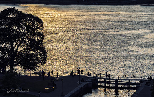 nikon nikkor d750 ottawa ontario canada river sunset water reflections yellow shadows silhouettes dawn evening downtown city cityscape citylife cityview streetphotography street streetart tree new digital geotagged dark summer art light people bridge life flickr