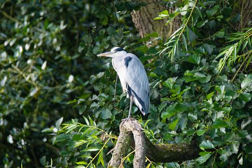 Vantage point: West Park heron