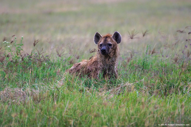 2019.06.09.4195 Hyena on Patrol POD