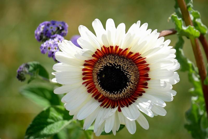 Au jardin des plantes. - Page 2 48443560736_01ca81ebbc_b