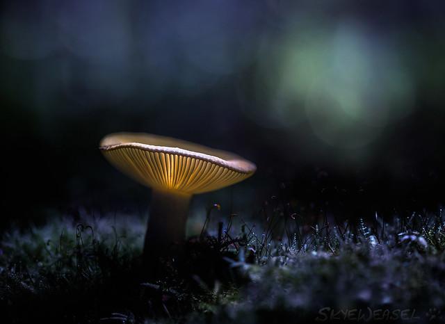 Velvet Undergrowth