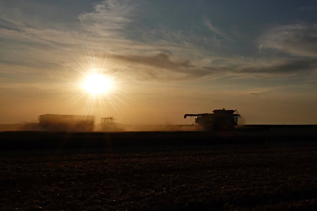 Grain harvest just before sunset