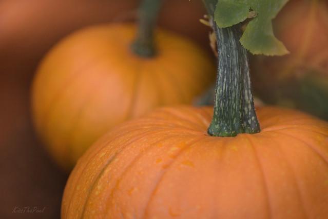 Plumptious Pumpkins...