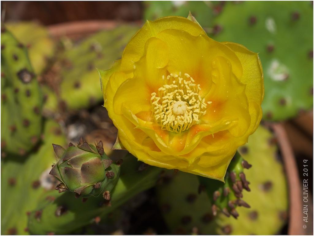 Cactus 48444162097_618fc82966_o