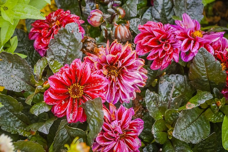 Gorgeous flowers 09:13:23 DSC_3432