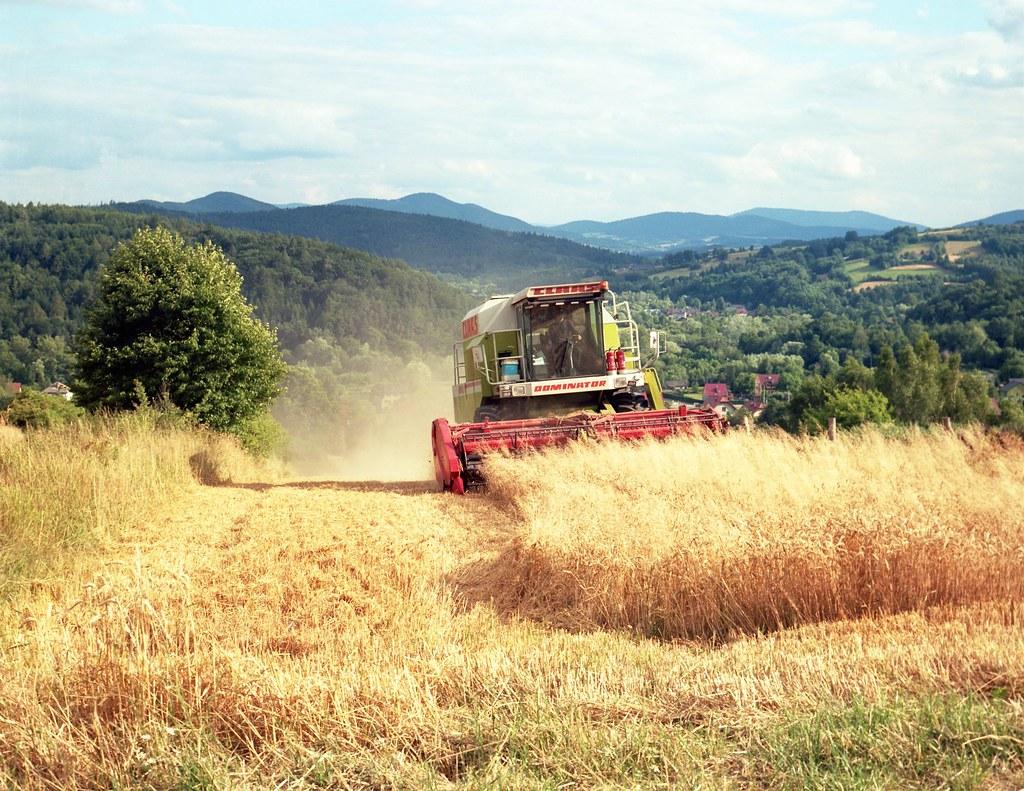 Żniwa na Skrzynce / Harvest time in Skrzynka