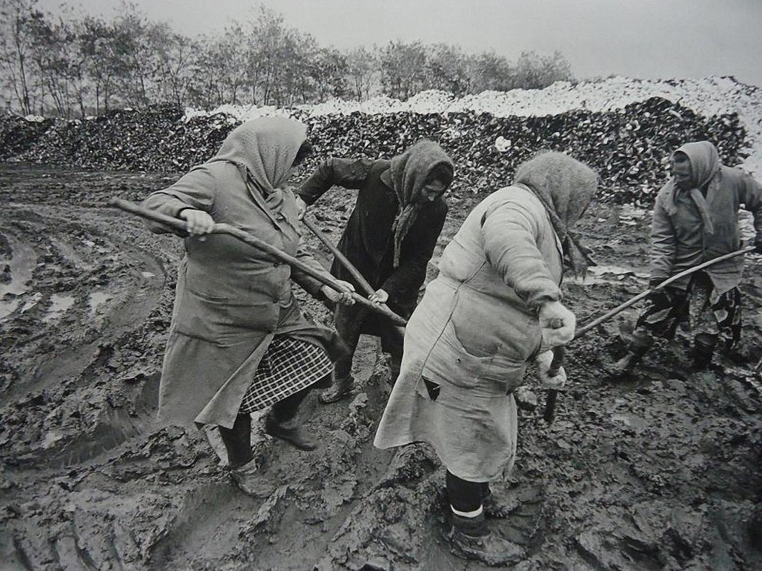 1997. Агропромышленное товарищество «Заря». Уборка свеклы
