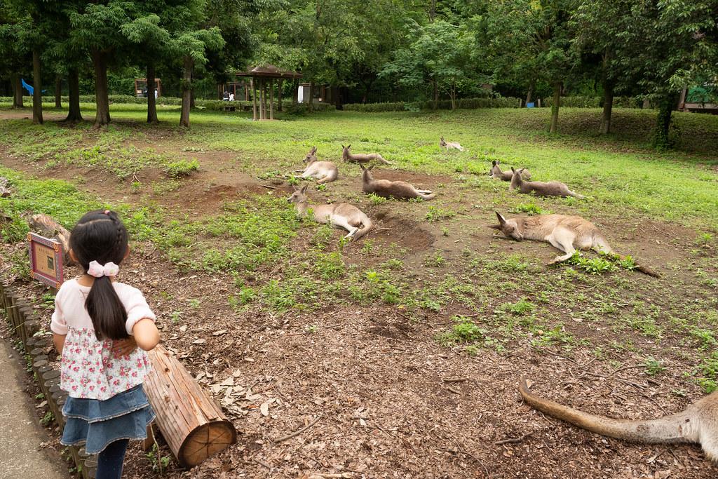 Saitama_childrens_ZOO-25