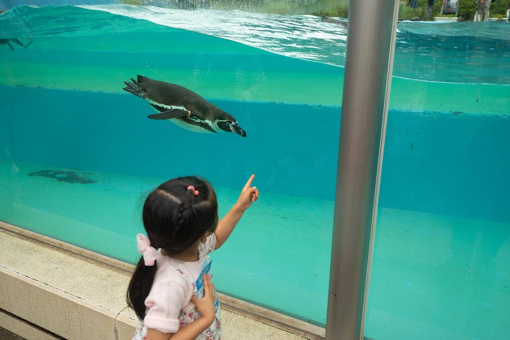 Saitama_childrens_ZOO-43