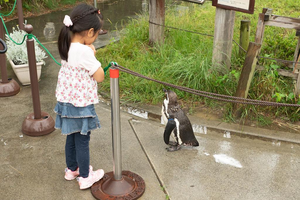 Saitama_childrens_ZOO-44
