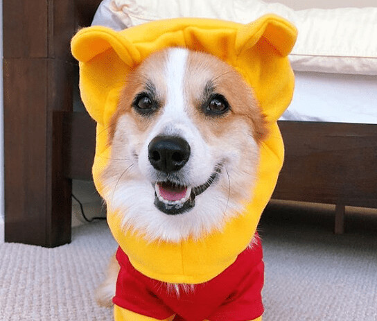 Halloween dress ideas for pets
