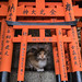 Japan Cat 1