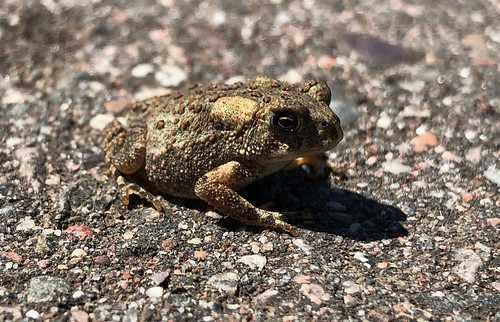 Kakabeka - the littel frog