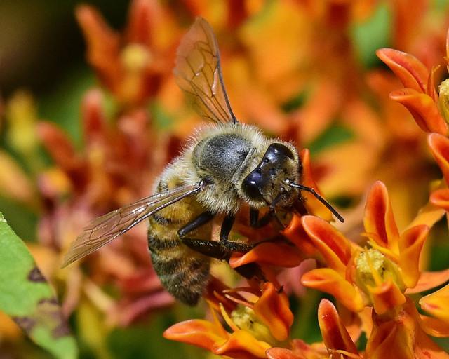 _DSC6113.T The Pollinator ll