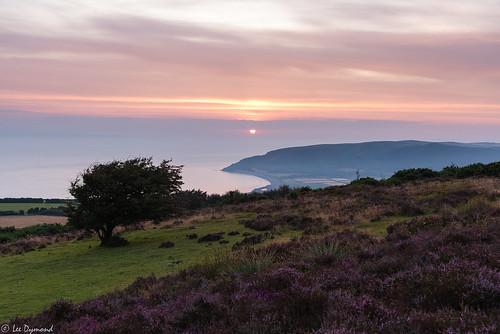 beach hawthorn hurlstonepoint landscape places porlockbay porlockcommon somerset sunrise minehead england unitedkingdom