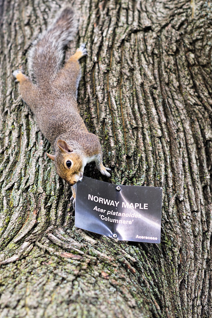 SIgn of the Times. Squirrel Eats the Metal Sign.