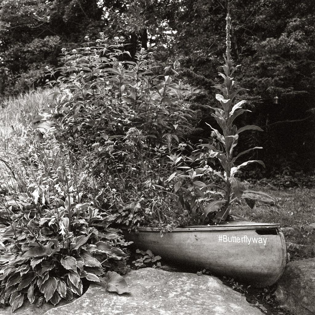 Ivan Forest Butterlfy Garden
