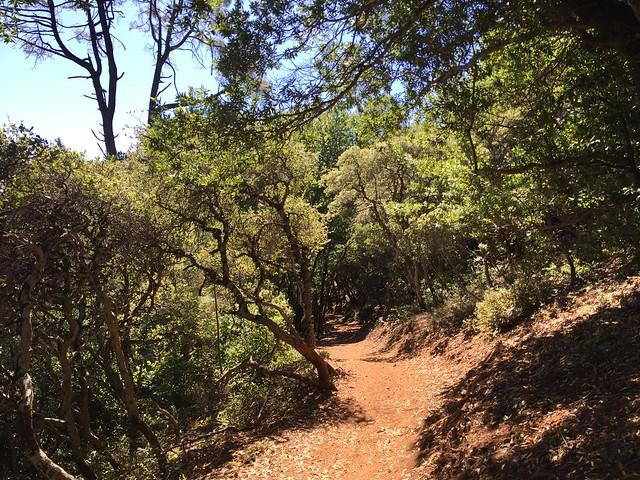Mt. Umunhum Trail
