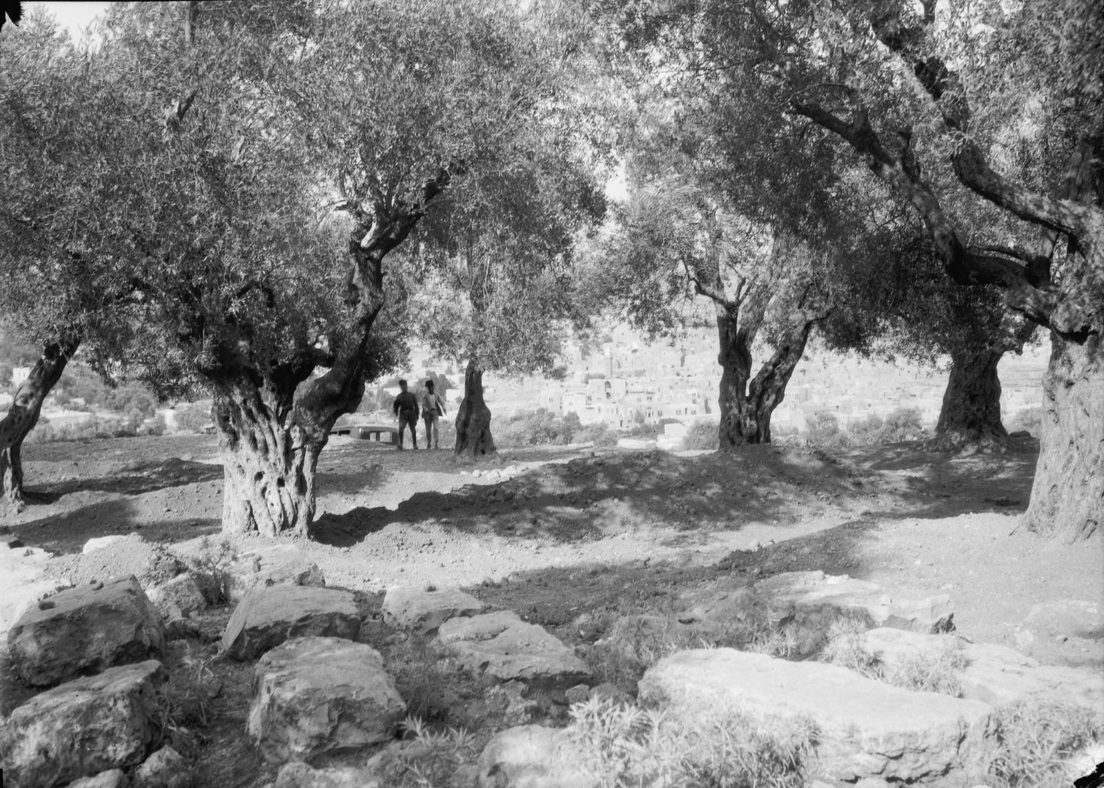 07. 23–31 августа. Хеврон. Могилы еврейских  жертв беспорядков. Большие братские могилы под оливковыми деревьями